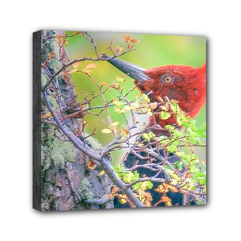 Woodpecker At Forest Pecking Tree, Patagonia, Argentina Mini Canvas 6  x 6
