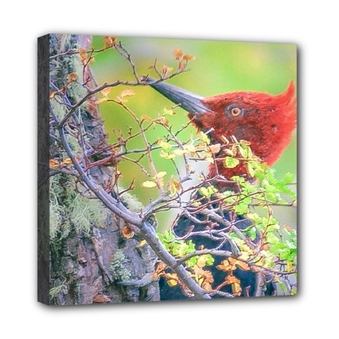 Woodpecker At Forest Pecking Tree, Patagonia, Argentina Mini Canvas 8  x 8