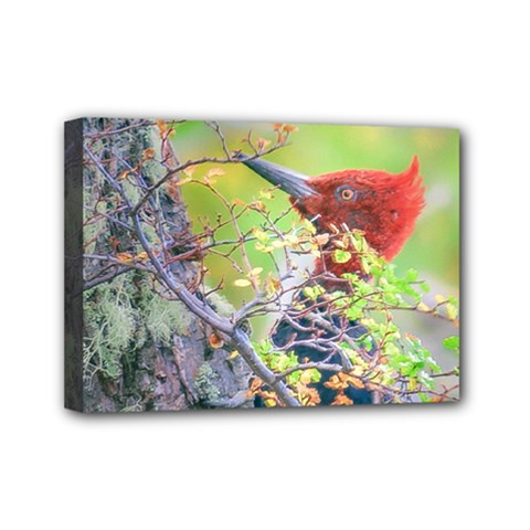 Woodpecker At Forest Pecking Tree, Patagonia, Argentina Mini Canvas 7  x 5