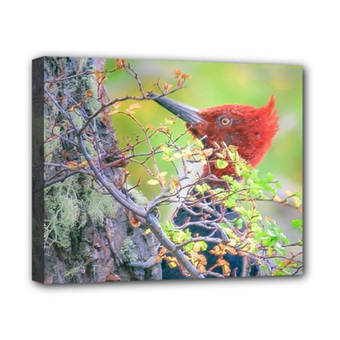 Woodpecker At Forest Pecking Tree, Patagonia, Argentina Canvas 10  x 8