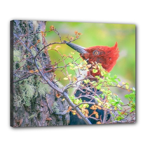 Woodpecker At Forest Pecking Tree, Patagonia, Argentina Canvas 20  x 16