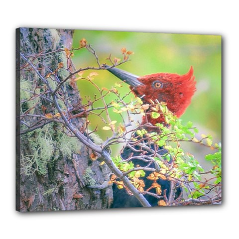 Woodpecker At Forest Pecking Tree, Patagonia, Argentina Canvas 24  x 20