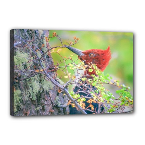 Woodpecker At Forest Pecking Tree, Patagonia, Argentina Canvas 18  x 12
