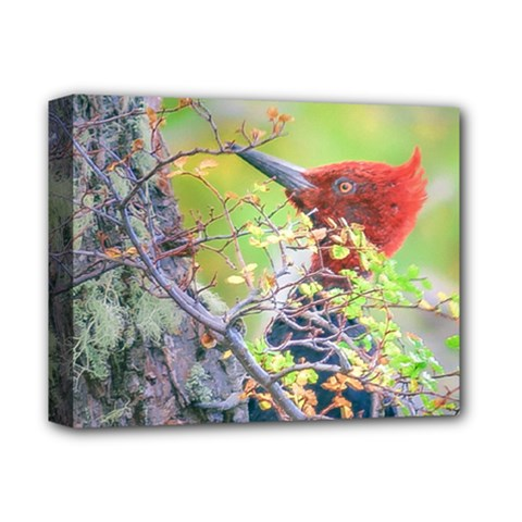 Woodpecker At Forest Pecking Tree, Patagonia, Argentina Deluxe Canvas 14  x 11