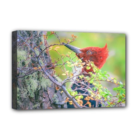 Woodpecker At Forest Pecking Tree, Patagonia, Argentina Deluxe Canvas 18  x 12