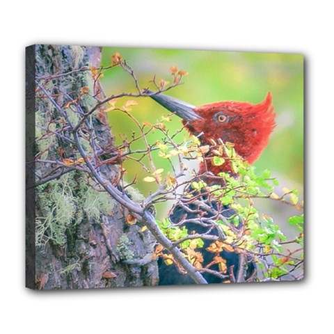 Woodpecker At Forest Pecking Tree, Patagonia, Argentina Deluxe Canvas 24  x 20