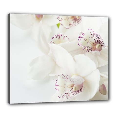 Orchids Flowers White Background Canvas 24  X 20