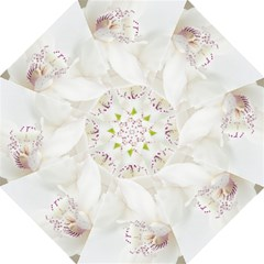 Orchids Flowers White Background Straight Umbrellas