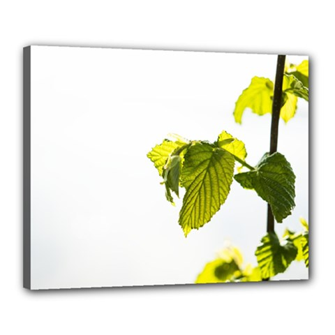 Leaves Nature Canvas 20  x 16