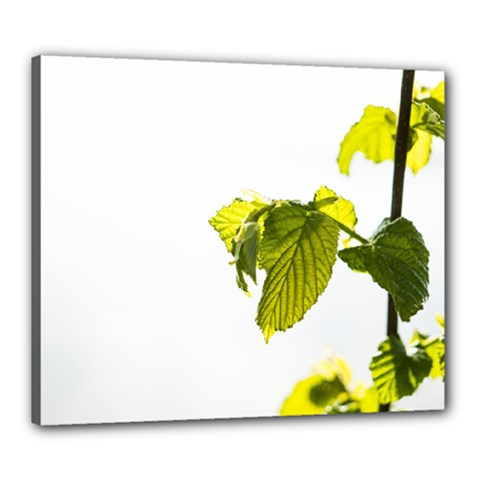 Leaves Nature Canvas 24  x 20