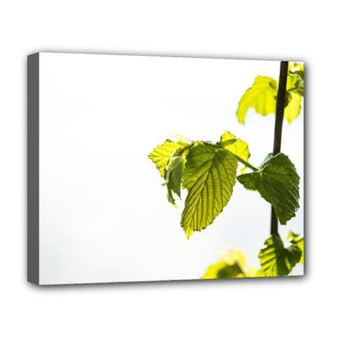 Leaves Nature Deluxe Canvas 20  X 16
