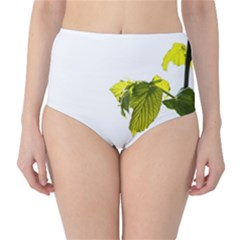 Leaves Nature High Waist Bikini Bottoms