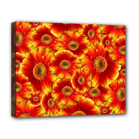 Gerbera Flowers Nature Plant Deluxe Canvas 20  X 16