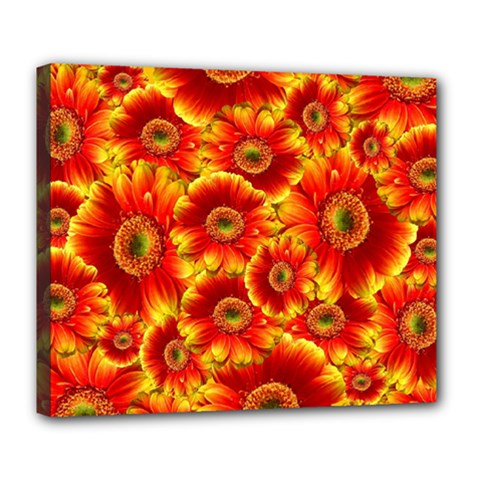 Gerbera Flowers Nature Plant Deluxe Canvas 24  X 20