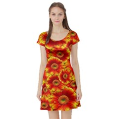Gerbera Flowers Nature Plant Short Sleeve Skater Dress