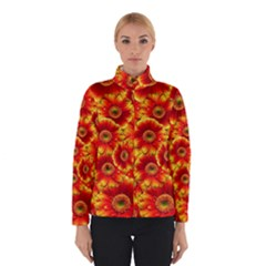 Gerbera Flowers Nature Plant Winterwear