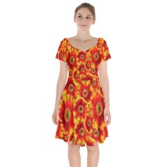 Gerbera Flowers Nature Plant Short Sleeve Bardot Dress
