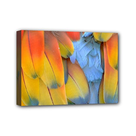 Spring Parrot Parrot Feathers Ara Mini Canvas 7  X 5