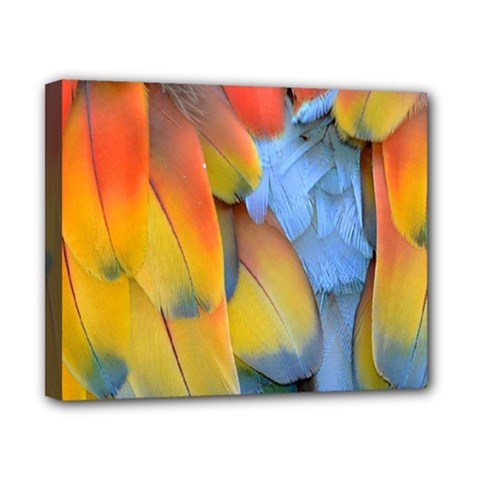 Spring Parrot Parrot Feathers Ara Canvas 10  X 8