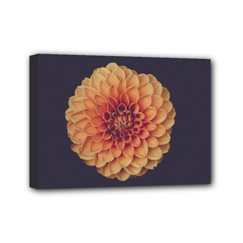 Art Beautiful Bloom Blossom Bright Mini Canvas 7  X 5