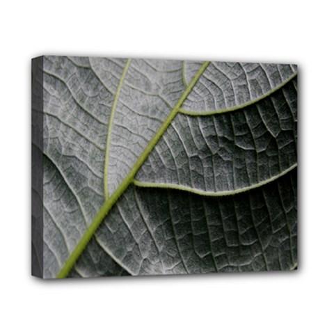 Leaf Detail Macro Of A Leaf Canvas 10  X 8