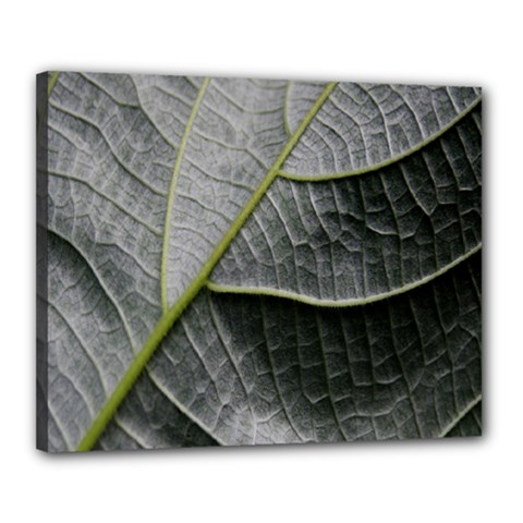 Leaf Detail Macro Of A Leaf Canvas 20  X 16