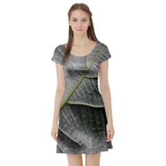 Leaf Detail Macro Of A Leaf Short Sleeve Skater Dress