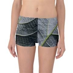 Leaf Detail Macro Of A Leaf Boyleg Bikini Bottoms