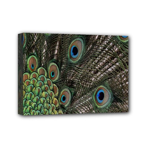 Close Up Of Peacock Feathers Mini Canvas 7  X 5
