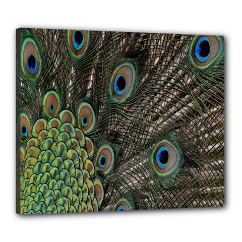 Close Up Of Peacock Feathers Canvas 24  X 20