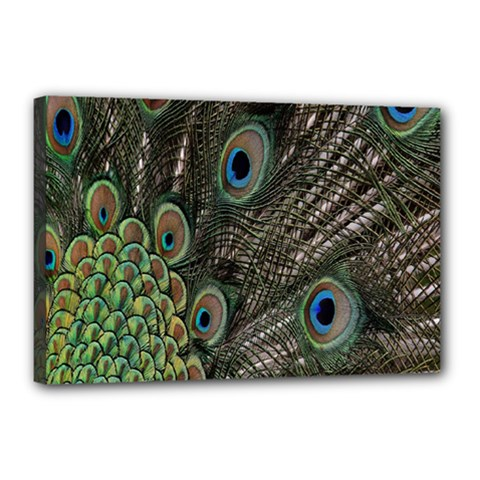 Close Up Of Peacock Feathers Canvas 18  X 12