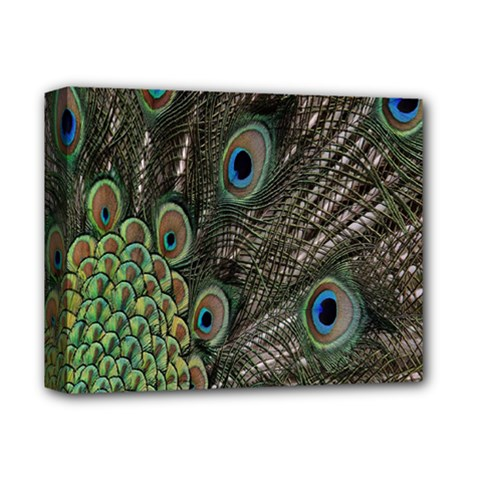 Close Up Of Peacock Feathers Deluxe Canvas 14  X 11