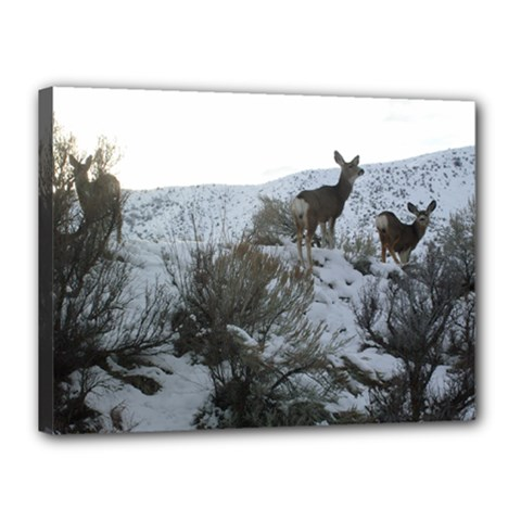 White Tail Deer 1 Canvas 16  x 12