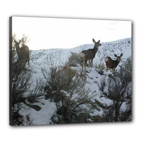 White Tail Deer 1 Canvas 24  x 20