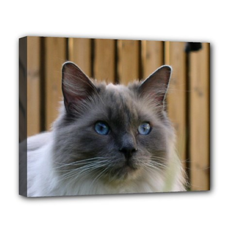 Ragdoll, Blue Deluxe Canvas 20  x 16