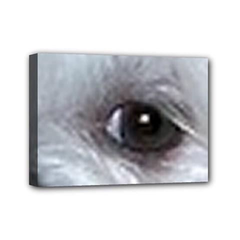 Maltese Eyes Mini Canvas 7  x 5