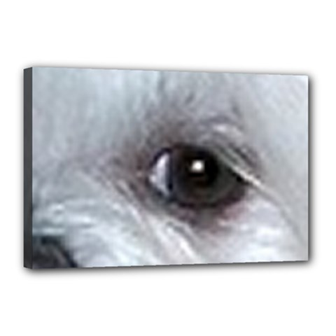 Maltese Eyes Canvas 18  x 12