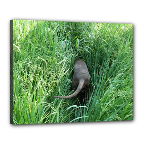 Weim In The Grass Canvas 20  x 16