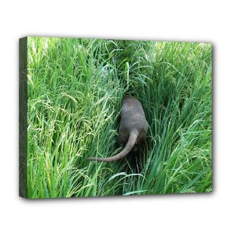 Weim In The Grass Deluxe Canvas 20  x 16