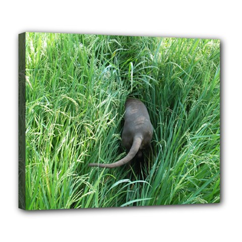 Weim In The Grass Deluxe Canvas 24  x 20