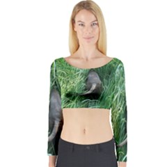 Weim In The Grass Long Sleeve Crop Top