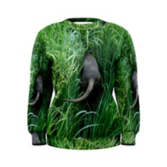 Weim In The Grass Women s Sweatshirt