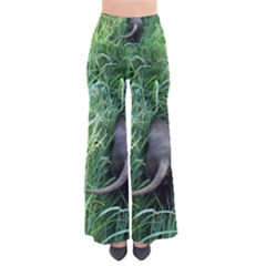 Weim In The Grass Pants