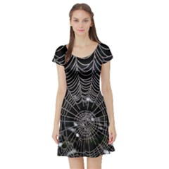 Spider Web Wallpaper 14 Short Sleeve Skater Dress