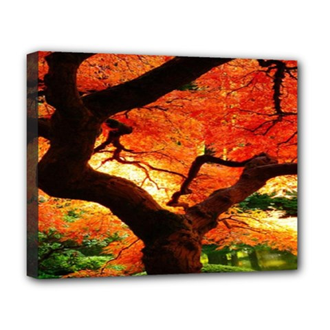 Maple Tree Nice Deluxe Canvas 20  X 16