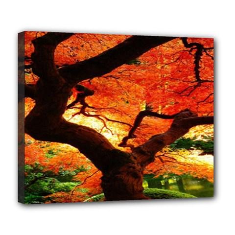 Maple Tree Nice Deluxe Canvas 24  x 20