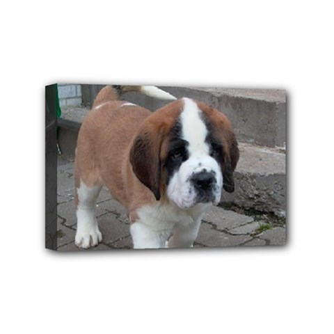 St Bernard Pup Mini Canvas 6  x 4