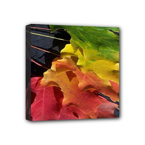 Green Yellow Red Maple Leaf Mini Canvas 4  X 4