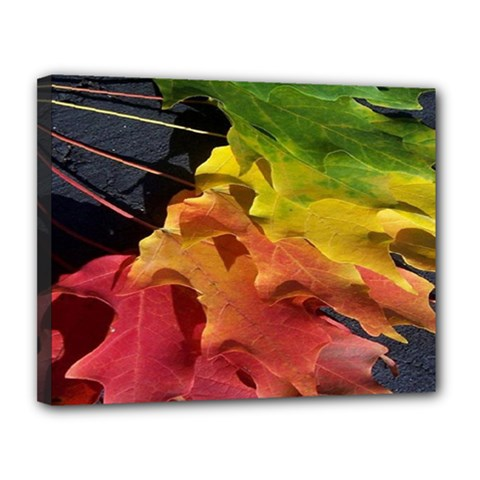 Green Yellow Red Maple Leaf Canvas 14  X 11