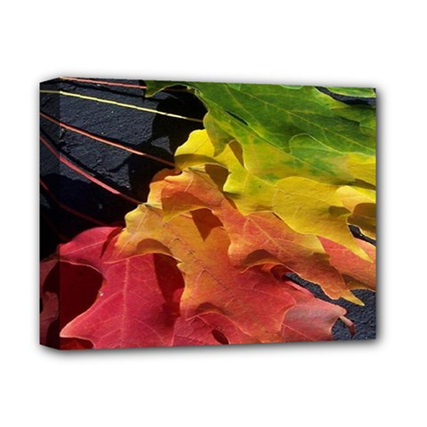 Green Yellow Red Maple Leaf Deluxe Canvas 14  x 11